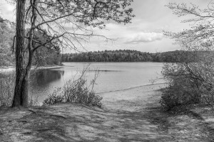 Thoreau's Walden Pond in Concord, Massachusetts