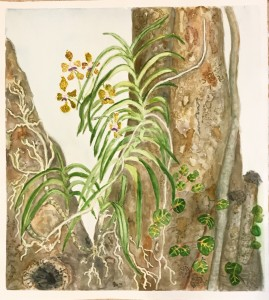Bonnie Gross Orchid in Seagrape Tree 20x20