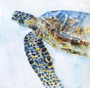SOLD Claudia-Hafner sea-turtle-